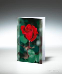 trauerbild-rote-rose